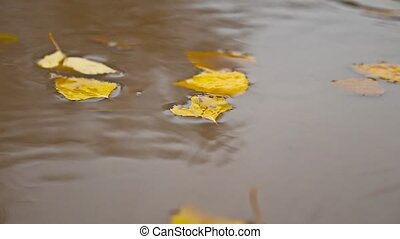 the rain in the fall in a puddle of nature yellow leaves...