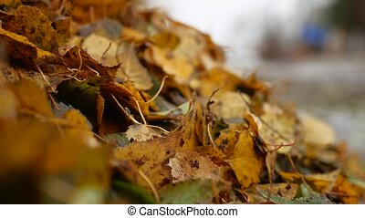 heap of dirty wet yellow leaves trees autumn background...