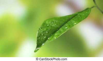 Leaf with drop of rain water with green background