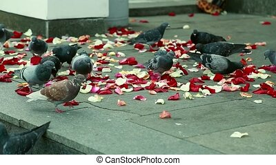 Pigeons on the steps strewn with red rose petals