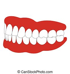 dentures with white teeth, dentition the gums of the upper...