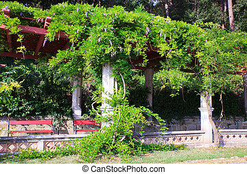 Wisteria also spelled Wistaria or Wysteria is a genus of...