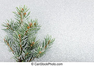 Fir tree on shiny silver background
