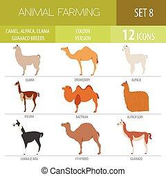 Camel, llama, guanaco, alpaca breeds icon set. Animal...
