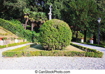 Buxus in the Miramare park - View of the Buxus in the...