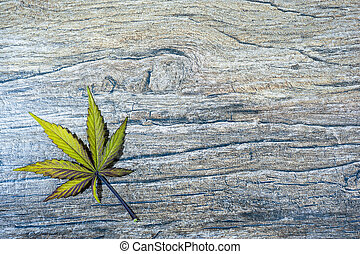Single cannabis leaf - Single green and violet cannabis leaf...