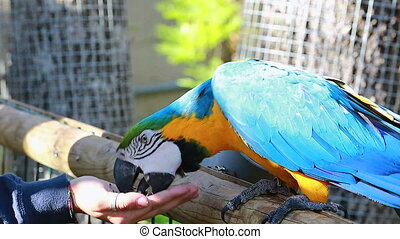 Feeding The Parrot By Hand - Woman Feeding Blue and Yellow...