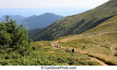 Hikers walk far off in mountains in summer - Group of hikers...