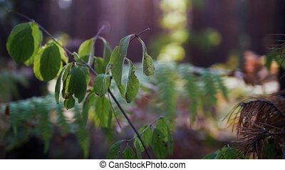 Fern in sunny forest, green grass, rack focus