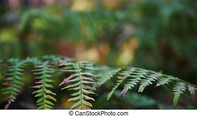 Fern in the forest, green grass