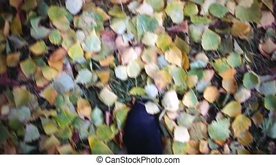 Conceptual video of legs in boots on the autumn leaves. Feet shoes walking in nature.