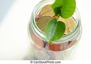 Little plant sprouting from pile of coins