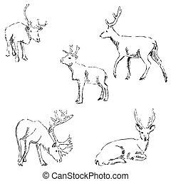 Deer sketch. Pencil drawing by hand