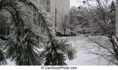 Ice-covered trees in Moscow, Russia - Ice-covered trees in a...