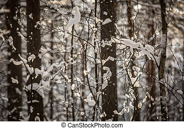 snow covered trees - winter forest with snow covered trees