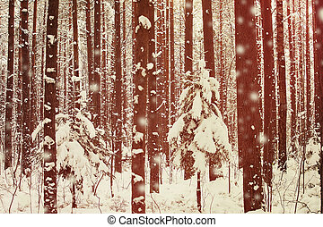 snow covered trees - winter forest with snow covered trees,...