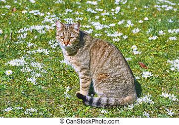 Cat on the Lawn - Cat on the Cat on the Lawn among the White...