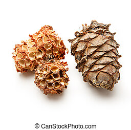 Pine cones from forest on white background