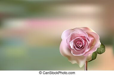 Delicate pink Rose on a blurred green background