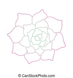 Line art succulent plant on white background