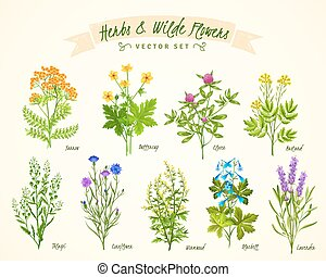Herbs And Wild Flowers Background Set - Flat white...