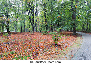 Bicycle path through autumn forest of Dutch National Park...