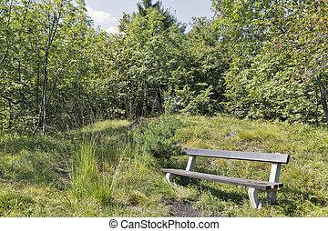 Old bench in Slovenian mountains - Forest and old bench in...