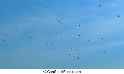 Slow motion, against the blue sky flies a flock of black...