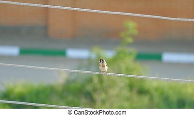 Slow motion, bird sitting on a wire - house swallow bird...