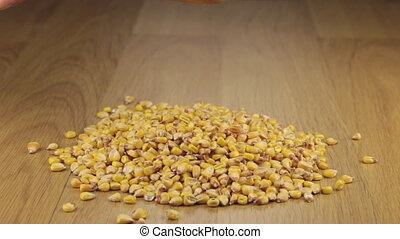 Corn grains get enough sleep from a wooden spoon on a pile of corn