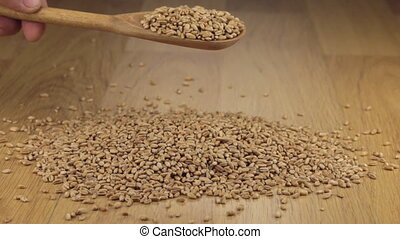Wheat grains from a wooden spoon on a pile of wheat on a...