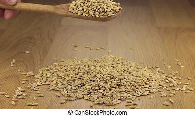 Barley grains get enough sleep from a wooden spoon on a pile...