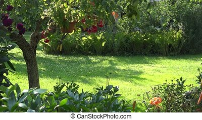 Male gardener mowing grass between flowers and fruit trees...