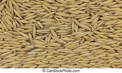 Horizontal panorama of grains oats, food background. View...