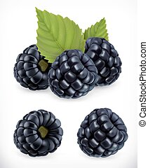 Blackberry. Sweet fruit. Forest berry. 3d vector icons set. Realistic illustration