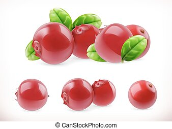 Lingonberry. Cowberry sweet fruit. Forest berry. 3d vector icons set. Realistic illustration