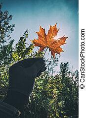 leaf - orange leaf in hand on sky background