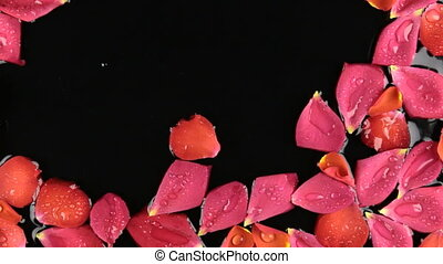 Wind on rose petals with dew drops, spa concept. Beautiful relaxing.