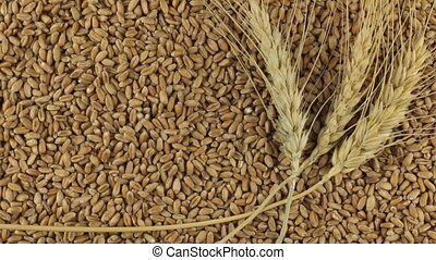 Rotation of the spikelets of wheat lying on the wheat...