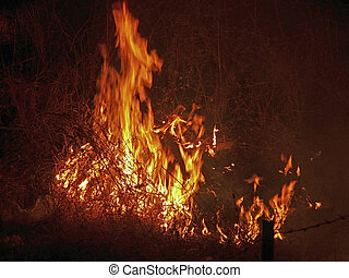Conflagration of a forest