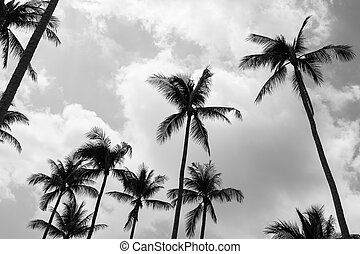 Palm trees (Black and white) - Palm trees in samui...