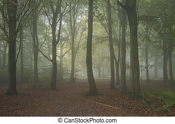 Stunning colorful moody vibrant Autumn Fall foggy forest...