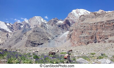 Donkeys grazing in the mountains. Panorama. Pamir....