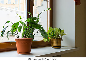 Two potted flower stand on windowsill - Two potted flower...