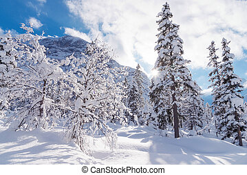 Landscape with trees covered with snow