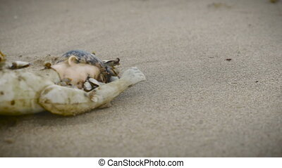 Part of a plastic doll on the sand covered in live shells -...