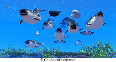 Narwhal Whales - Narwhal whales live in social groups called...