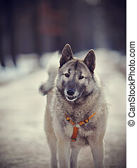 Portrait of a shaggy dog - Portrait of a shaggy domestic dog...