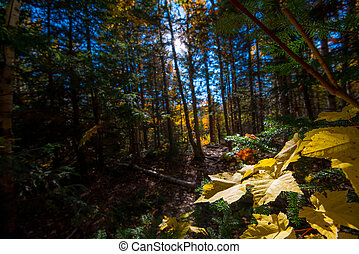 Maple leaves in the forest in daylight