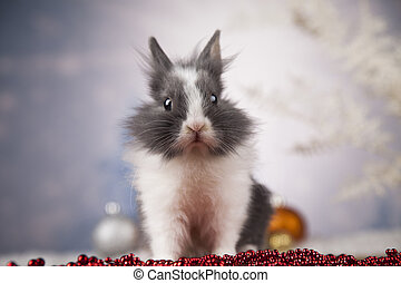 Little bunny,Funny rabbit on Christmas background - Funny...